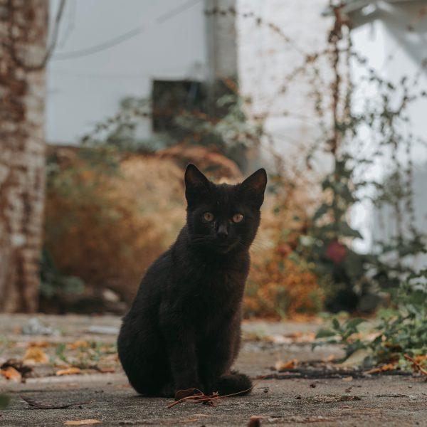 CatFriend 2